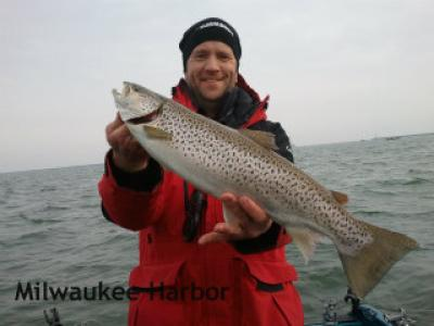 Nice Milwaukee Harbor brown trout caught by Captain Doug Kloet December 2012