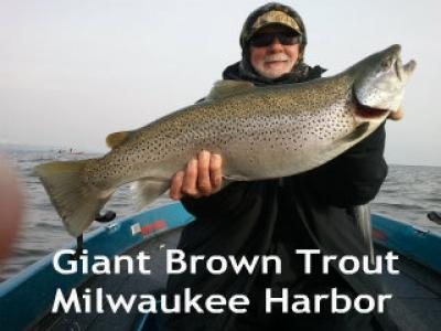 Giant Milwaukee Harbor brown trout caught by Bill Pocius December 2012