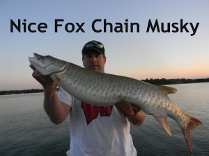Fox Chain of lakes Musky fishing Guide service fox chain of lakes muskie fishing guide serivce